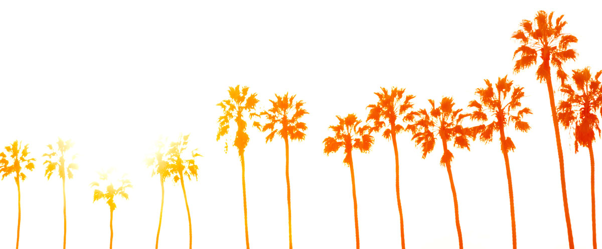 Palmtrees - Ginger Wagoner, Photographer, Photosynthesis