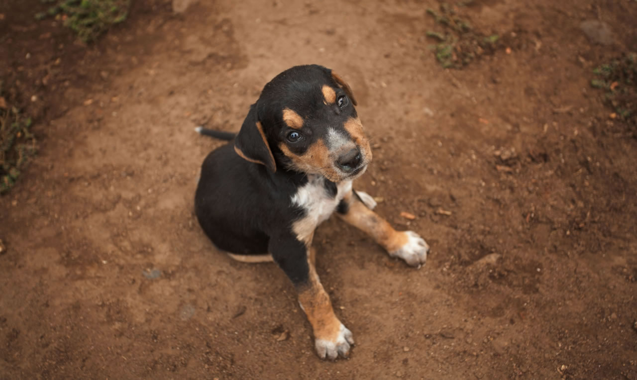 Puppy in Nicaragua - Ginger Wagoner, Photographer, Photosynthesis